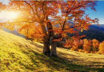 Tranh phong cảnh mùa thu 45