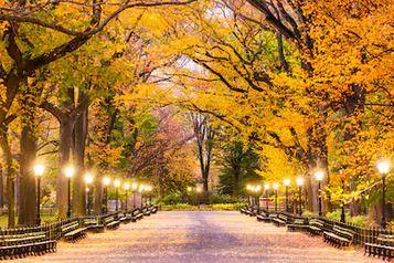 Tranh phong cảnh mùa thu 46