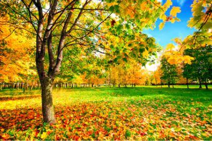 Tranh phong cảnh mùa thu 48
