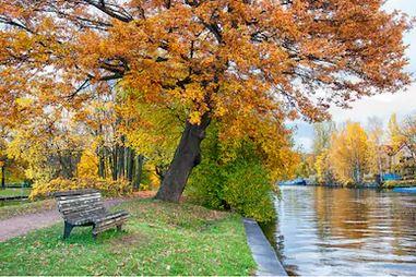 Tranh phong cảnh mùa thu 49