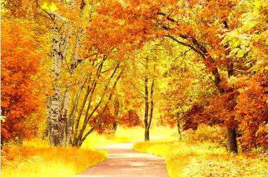 Tranh phong cảnh mùa thu 05
