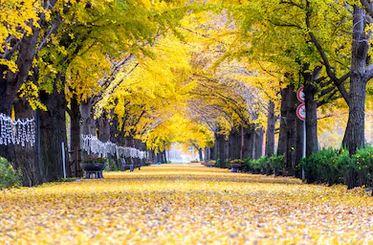 Tranh phong cảnh mùa thu 53