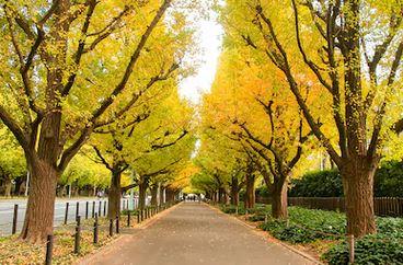 Tranh phong cảnh mùa thu 54