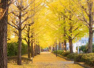 Tranh phong cảnh mùa thu 55