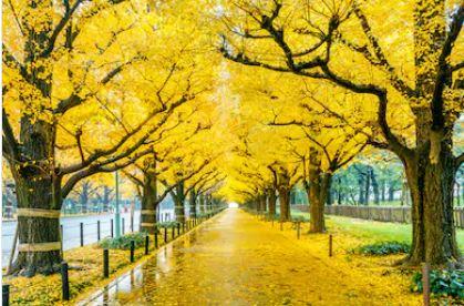 Tranh phong cảnh mùa thu 56