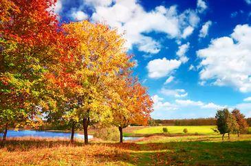 Tranh phong cảnh mùa thu 57