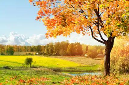 Tranh phong cảnh mùa thu 58
