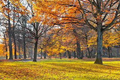 Tranh phong cảnh mùa thu 59