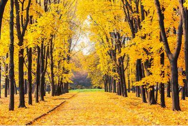 Tranh phong cảnh mùa thu 06