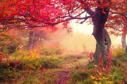 Tranh phong cảnh mùa thu 61