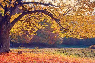Tranh phong cảnh mùa thu 62