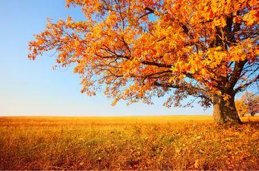 Tranh phong cảnh mùa thu 63