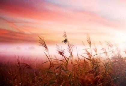 Tranh phong cảnh mùa thu 64