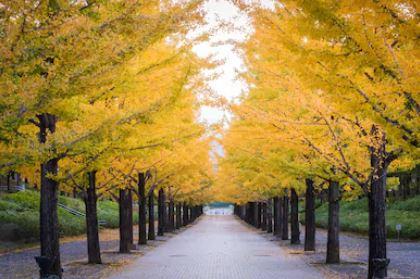 Tranh phong cảnh mùa thu 65