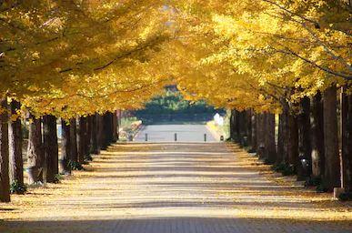 Tranh phong cảnh mùa thu 66