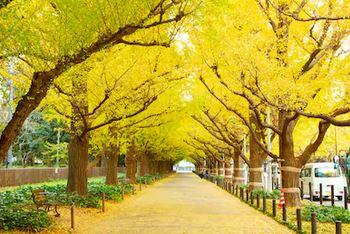 Tranh phong cảnh mùa thu 67