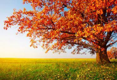 Tranh phong cảnh mùa thu 69
