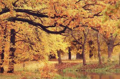 Tranh phong cảnh mùa thu 07