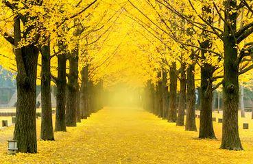 Tranh phong cảnh mùa thu 70