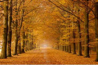 Tranh phong cảnh mùa thu 71