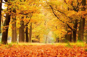 Tranh phong cảnh mùa thu 72