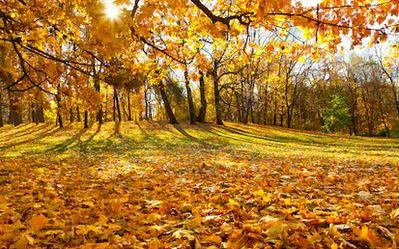 Tranh phong cảnh mùa thu 74