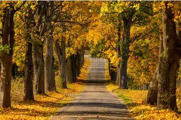 Tranh phong cảnh mùa thu 75