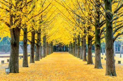 Tranh phong cảnh mùa thu 76