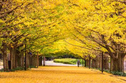 Tranh phong cảnh mùa thu 78