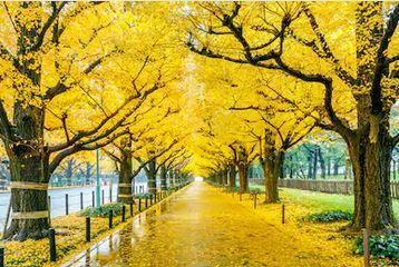 Tranh phong cảnh mùa thu 79