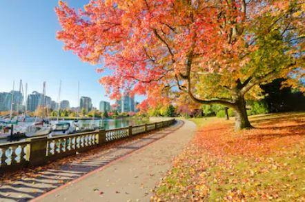 Tranh phong cảnh mùa thu 08