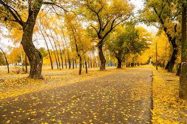 Tranh phong cảnh mùa thu 82