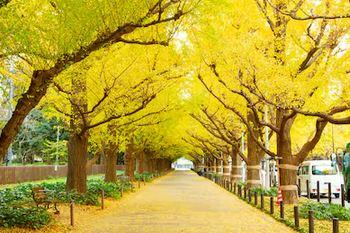 Tranh phong cảnh mùa thu 83
