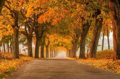 Tranh phong cảnh mùa thu 84
