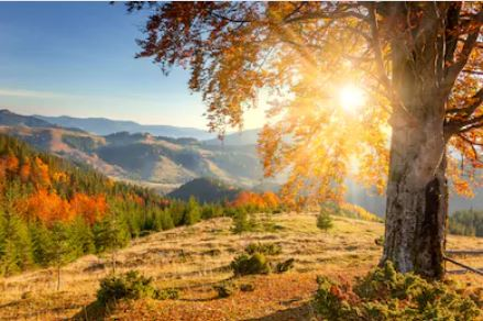 Tranh phong cảnh mùa thu 85