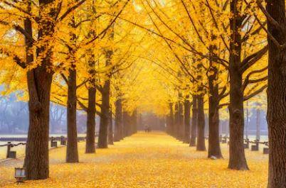 Tranh phong cảnh mùa thu 87