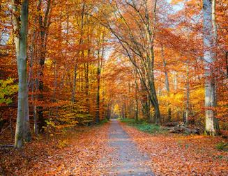 Tranh phong cảnh mùa thu 89