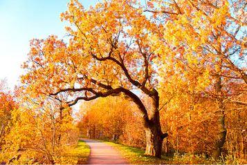 Tranh phong cảnh mùa thu 09