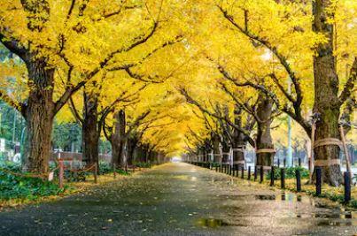 Tranh phong cảnh mùa thu 90