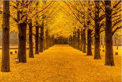 Tranh phong cảnh mùa thu 91