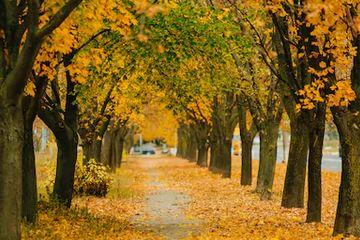 Tranh phong cảnh mùa thu 93