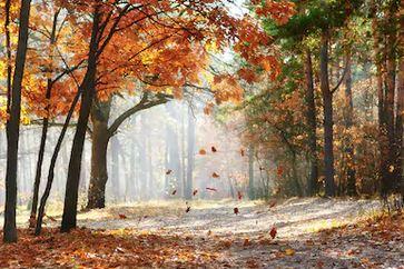 Tranh phong cảnh mùa thu 94