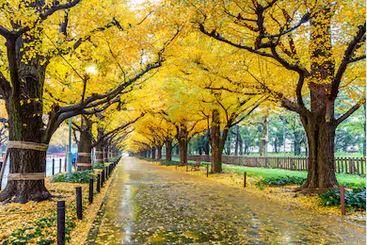Tranh phong cảnh mùa thu 95