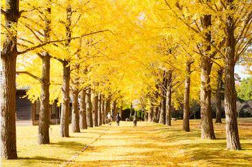 Tranh phong cảnh mùa thu 96