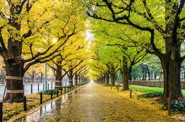 Tranh phong cảnh mùa thu 97