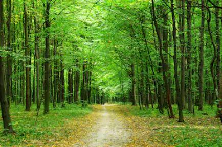 Tranh rừng cây 01