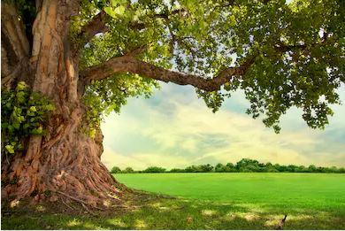 Tranh rừng cây 10