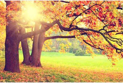 Tranh rừng cây 12