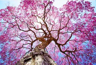 Tranh rừng cây 14