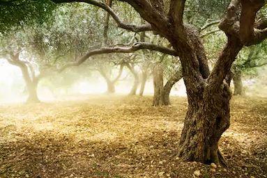 Tranh rừng cây 16